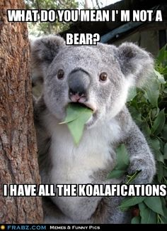 get it? get it? KOALAfications like qualifications... haha classic comedy