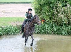 Getting Wet | Beautiful Horse Pictures