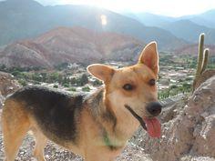 Frente al Cerro de los siete colores. Purmamarca, Jujuy, Argentina. Quebrada de Humahuaca.  Siempre hay un perro para acompañarte. PH: Josefina Lorenzo