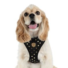 www.puppyshome.com So beautiful! Perfect for Spring! Modern Black Gold Dotty Harness