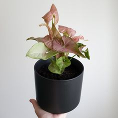 Fern Planter Pot 28cm in Diameter 11