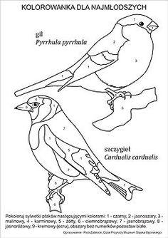 Najlepsze Obrazy Na Tablicy Ptaki Zima 20 Ptaki Zima I Ptaki