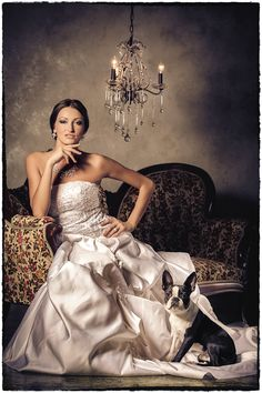 Boston Terrier. Russian Bride. Vintage Couch