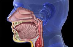 PURIFICACION DE AIRE AIR LIFE te dice ¿qué provoca la Faringitis? La faringitis es una enfermedad altamente contagiosa causada por el grupo A de bacterias estreptococo. Los Institutos Nacionales de Salud informan que la faringitis es la infección bacteriál de garganta más común. Los síntomas que incluyen dolor de garganta, náuseas, fiebre y escalofríos generalmente aparecen entre dos y cinco días desde la exposición. El pronóstico con tratamientos de antibióticos es bueno.
