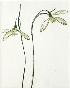 'Snowdrop III' etching by Gráinne Cuffe (Edition of 20)