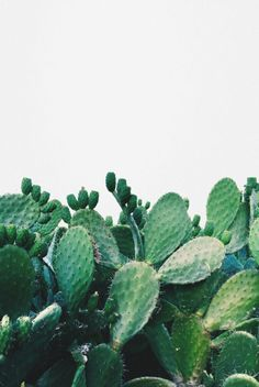 Cactus | Plants | Green | White | More on Fashionchick.nl