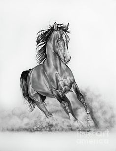 Arabian Horse pencil drawing