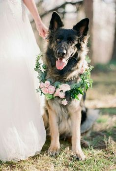 Woof! How cute is this? Pet lovers check out the fourth pick of our favorite winter wedding wreath inspiration. The pale pink ranunculus add a special pop of fabulous to this pet-friendly floral collar. PHOTO @martalocklearphoto @brides #weddingwreaths #doglover #weddingphoto #germansheperd