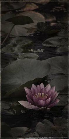 "Flowers in Neutral Moment-2014 ""Nymphaea(Water lily)-#3"" Archival pigment print Photo by Soichi Oshika"