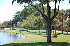 The Hammocks Lakes in Kendall - mini beach, trees Hammocks, Lakes, Kendall, Miami, Beach, Photography, Photograph, Hammock Chair, The Beach