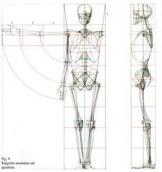 Struttura Uomo Manuale di Anatomia Artistica Vol. 1 - Google Search