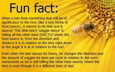 Call Bee Specialists in Bloomfield Hills, MI today at I Love Bees, Birds And The Bees, Bee Facts, Raising Bees, Buzzy Bee, Bee Friendly, Save The Bees, Bee Happy, Bees Knees