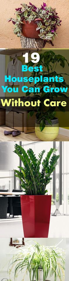 These 19 Easiest Houseplants are perfect for lazy, busy and newbies, who want to plant easy indoor plants that grow with minimal care. These plants patiently survive the harsh conditions, they forgive your neglect and small mistakes. If you forget about w Container Plants, Container Gardening, Gardening Tips, Organic Gardening, Indoor Gardening, Indoor Planters, Gardening Direct, Gardening Zones, Hanging Planters