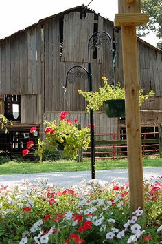 Old Barn & Flowers