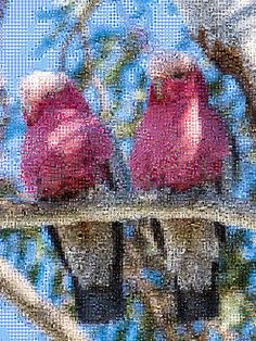'Pink Birds', a zoomable photo tile mosaic at TileArray #birds #pink #mosaic #mosaics #TileArray