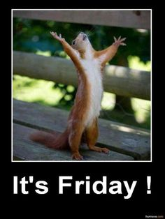 its friday, squirrel funny pictures