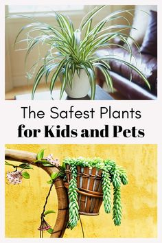 One of the easiest ways to breathe some life into a room is with the addition of a plant or two. Plants not only add colour, but many houseplants also have air-purifying properties. The drawback, though, is that some of the most popular houseplants are also toxic to pets and children. If you want to spruce up your home without the worry, consider these plants instead. They are non-toxic so your pets and kids will be safe, even if they tend to nibble on the decor. Outdoor Life, Outdoor Spaces, Garden Plants, Indoor Plants, Planting For Kids, Pet Safe, Animals For Kids, Kitchen Hacks, Plant Decor