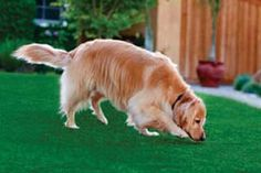 Pup-Grass Artificial Dog Grass Drains Instantly. Use for Kennels, Landscaping, Dog Parks and Potty areas for Dogs.