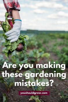 Gardening for beginners: are you making these gardening mistakes? Everyone makes mistakes, but the good news is you can always learn from them. Even if you are currently making these mistakes in your garden, you can change now that you know better. Click to read the full article at youshouldgrow.com/worst-gardening-mistakes