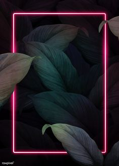Rectangle pink neon frame on tropical leaves background vector | premium image by rawpixel.com / manotang
