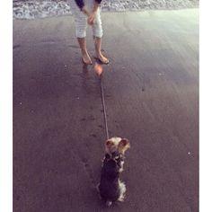 や…やだやだ!おねえちゃん!!後ろからなんかきてるよ!あぶないよ!  #east_dog_japan #ヨークシャーテリア #ヨークシャテリア #ヨーキーlove #ヨーキー #犬 #犬バカ部 #犬のいる暮らし #犬がいないと生きていけません #わんこ #dog #dogs #pet #pets #pretty #prettydog #cute #cutedog #yorky #yorkie #yorkies #yorkshire #yorkielove #yorkshireterrier #むーたん #親バカ #愛犬 #親バカ部 #ふわもこ部