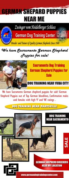 Our Website: http://germandogtrainingcenter.com/ for more information on German Shepherd Breeders Near My Location.