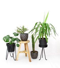 group of plants together