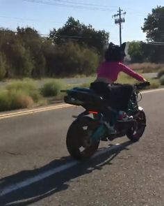 With her love of 2 wheels and wild adventure spirit, Robyn lives her best life performing stunts and wheelies on her Kawasaki Ninja Ducati Monster, and more. Moto Ninja, Ninja Bike, Motorcycle Couple, Scooter Motorcycle, Ducati Monster, Dirt Bike Wheelie, Dirt Bikes, Kawasaki Motorcycles, Girls On Motorcycles