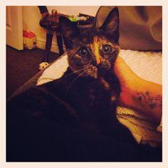 My gorgeous kitty