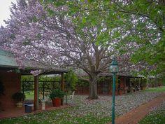 Beautiful Australia. #bunbury #perth #wa #australia #ig_australia #igersaustralia #travelphotography #travel #photooftheday #picoftheday #pictureoftheday #daily #dailypic #dailypicture #dailyphoto #instadaily #iphone #iphone6plus #iphoneography #iamwhatisee #isabelnolascophotography