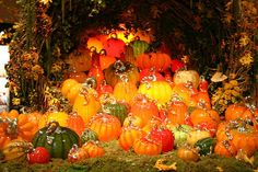 Wander through a dazzling array of one-of-a kind glass pumpkins in a variety of colors, shapes, and sizes at the Glass Pumpkin Patch. Things To Do Seattle, Types Of Pumpkins, Orange Kitchen Decor, Glass Floats, Autumn Scenes, Longwood Gardens, Pumpkin Art, Glass Pumpkins, Pumpkin Decorating