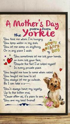 """Discover additional info on """"yorky pups"""". Visit our website. Yorkshire Terriers, Yorkshire Terrier Haircut, Mothers Day Poems, Free Puppies, Yorky, Teacup Yorkie, Yorkie Dogs, Rottweiler Puppies, Martin Luther King Day"""