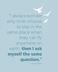 """I always wonder why birds choose to stay in the same place when they can fly anywhere on the earth, then I ask myself the same question."" - Harun Yahya"