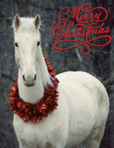 merry christmas horse with wreath by union county saddle club