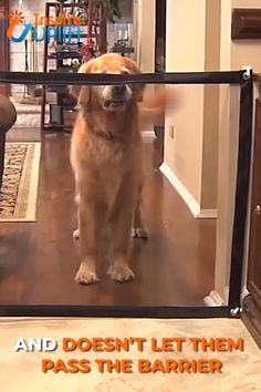 Dog Safety Gate 😍 Dog Safety Gate 😍 The Britedoggie Dog Safety Gate can be installed anywhere, including doorways, between walls, in stairwells, indoors and [. Pets, Pet Dogs, Dogs And Puppies, Pet Gate, Diy Dog Gate, Dog Safety, Dog Items, Dog Accessories, Dog Care