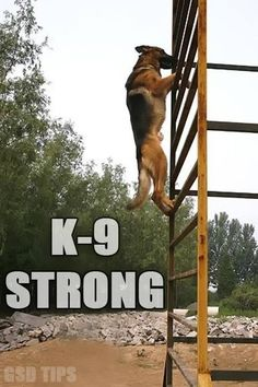 K-9 Strong! Humans aren't the only strong thing dogs can be strong to