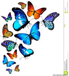 many-different-butterflies-flying-royalty-free-stock-photography.jpg (1102×1222)