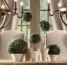 Topiaries. I like the light colored pots.