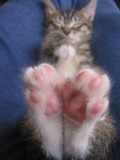 Best fuzzy feet ever! I love little pink kitty toes ♥