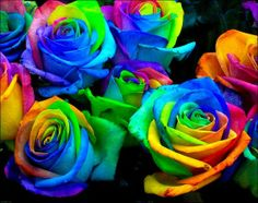 Can't wait to try this..Another science fair idea: Make rainbow roses by splitting the stems into strands and placing each one in food coloring. The roses draw the food coloring into the petals.
