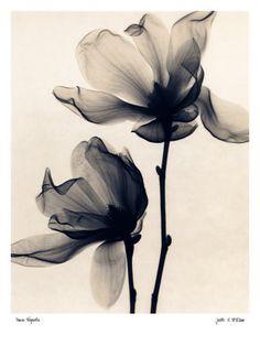 Photographies en noir et blanc Reproduction artistique sur AllPosters.fr