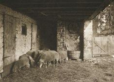 Die Kunst in der Photographie : 1901 Photographer: Henry Troth Title: Im Schafstall