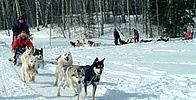 Lanaudière Plein Air, Husky, Dogs, Animals, Tourism, Animais, Animales, Animaux, Pet Dogs