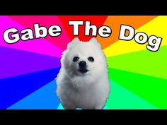 What are Bork remixes? Who is Gabe the dog? What kind of dog is he? Gabe the dog has been used online in a variety of ways, becoming a funny meme and … A Funny, Funny Memes, What Kind Of Dog, Dog Memes, Grumpy Cat, Doge, I Fall, Bing Images, History