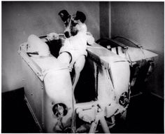 November 3, 1957: Laika, the female part-Samoyed terrier pictured here, became the first living being launched into orbit aboard Sputnik 2. Laika provided scientists with the first data on the behavior of a living organism in space, helping pave the way for the first human in space.