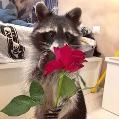 55 Funny And Cute Animals Animals And Pets, Baby Animals, Funny Animals, Cute Animals, Strange Animals, Cute Animal Pictures, Funny Pictures, Cute Cats, Funny Cats