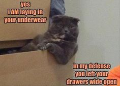 22 Funny Animal Pictures for Today