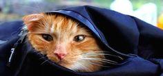 Meet Jesperpus, Confident Outdoors-Loving Cat of Norway - Catster