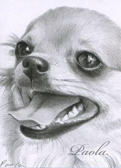Effective Potty Training Chihuahua Consistency Is Key Ideas. Brilliant Potty Training Chihuahua Consistency Is Key Ideas. Chihuahua Art, Chihuahua Drawing, Animal Drawings, Art Drawings, Dog Paintings, Little Dogs, Dog Art, Pet Portraits, Dog Life