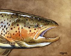BROWN TROUT Fly Fishing Watercolor Signed Fine Art Print by Artist DJ Rogers. $12.50, via Etsy.